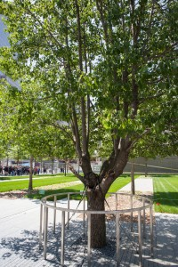 A Tree Grows at Ground Zero