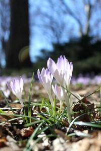 Botanic Garden blooms